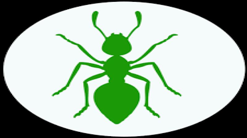 10 خطوات لمكافحة النمل